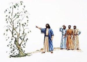 Jesus curses fig tree